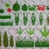 供应绿叶片、寿司草、山形绿叶片