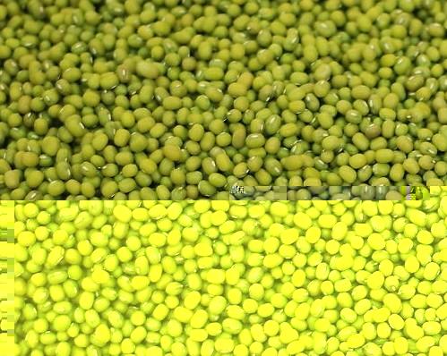 供应绿豆、绿豆粉,绿豆、绿豆粉最新批发价
