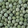 供应豌豆,豌豆最新批发价
