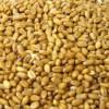 供应小麦、荞麦、燕麦,小麦最新批发价