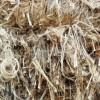 供应孟加拉进口麻根黄麻纤维