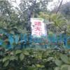 供应泉州油茶苗厂家_安溪高产油茶企业黄页_泉州油茶树苗企业