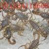 求购回收死蝎子 收购野生干蝎子