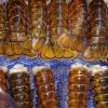 供应加拿大龙虾尾