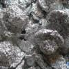 紧急求购大量回收废塑料,锡渣,锡膏