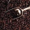 福州咖啡豆,福州咖啡豆批发,价格