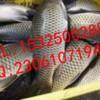 供应新型聚鱼诱食添加剂DMPT