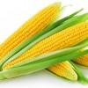 低价玉米,专业的玉米供应商