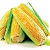 资阳最好的现金收购玉米(供销)