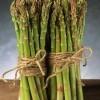 供应进口蒙德欧,芦笋种子,高产芦笋种子